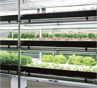 植物工場事業